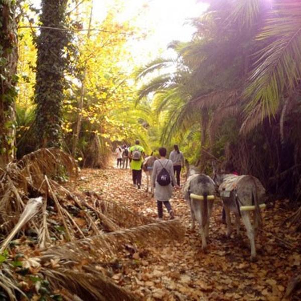 Senderismo con burros-Proyecto Burruticas